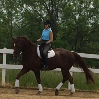 Gardist - 2004 American Hanoverian Gelding ($30,000 and Under)