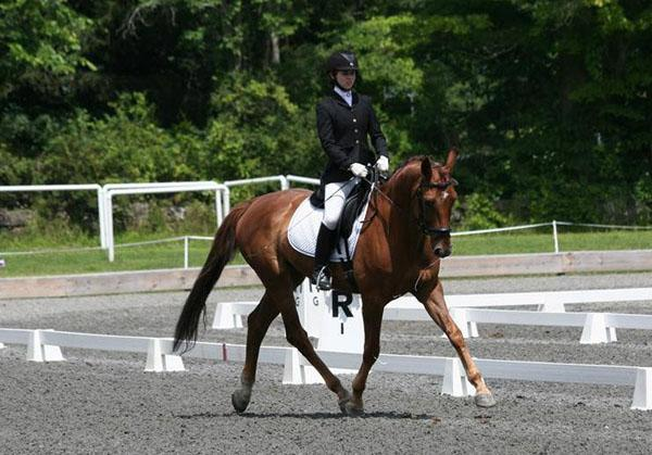 Dear Friend - 2008 Westphalian Gelding ($30,000 - $50,000)