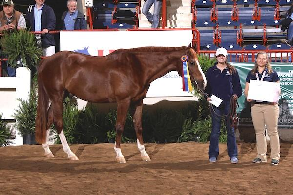 Harley, from Middle Tennessee State University, was named the SmartPak Most Popular Horse.