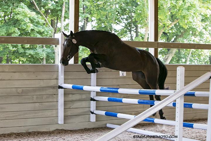 LOT #5: Hennessy - 2012 Bay Mare (Judgement ISF x Letida)