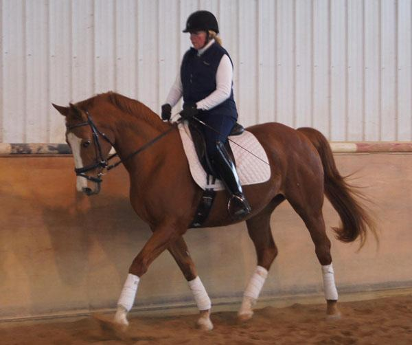 IA Collective Art - 2004 American Warmblood Mare ($30,000 and Under)