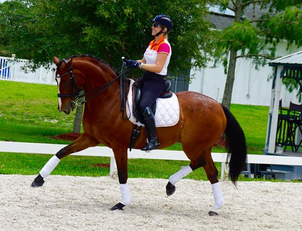 Jaggo - 2002 Swedish Warmblood Gelding ($100,000 and Up)