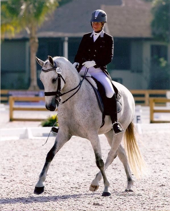 Zerbino Interagro and Johnny Robb will compete at the International Andalusian and Lusitano Horse Association (IALHA) National Championships<br />(Photo: Susan J Stickle)