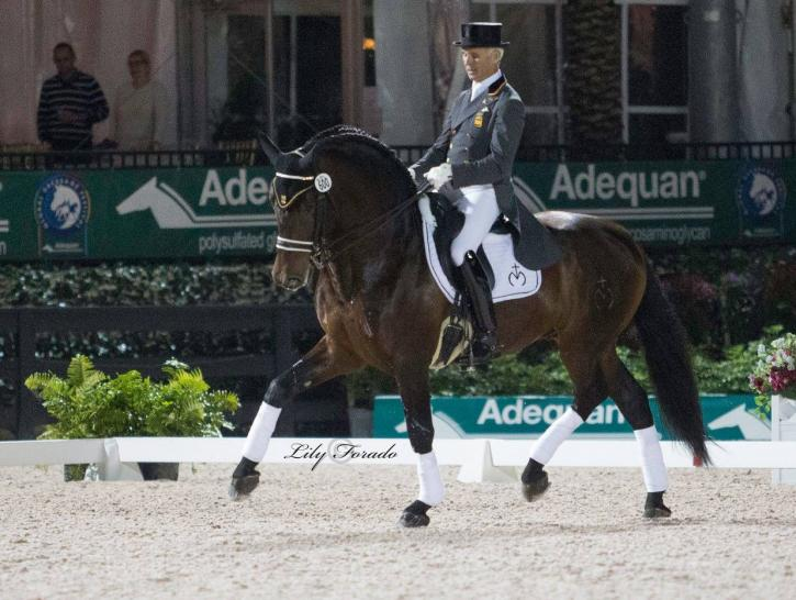 Juan Antonio Jimenez on a young FEI stallion Lenin Mor (Photo: Lily Forado)