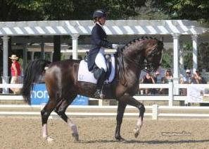 Katie Riley and KWPN stallion Zanzibar (Consul x Juventus/Farmer)<br />Third in Developing Grand Prix 2014