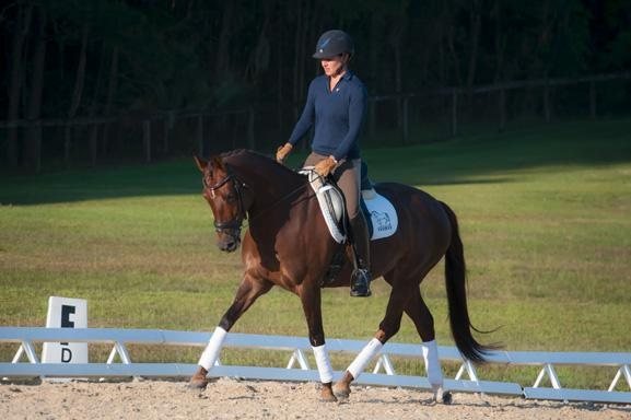 Katydid Baroness - 2008 German Riding Pony/TB/Welsh Mare ($30,000 and Under)