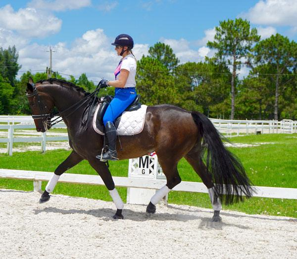 Leo - 2010 Oldenburg Gelding ($100,000 and Up)
