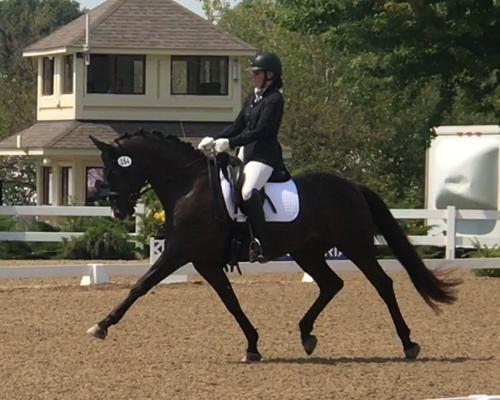 Les Paul - 2011 Hanoverian Gelding ($50,000 - $75,000)