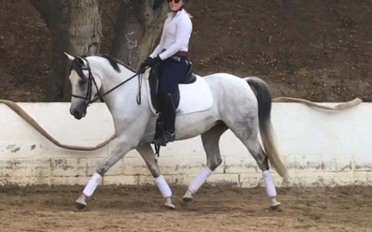 Lily - 2007 Connemara/WB cross Mare ($30,000 and Under)
