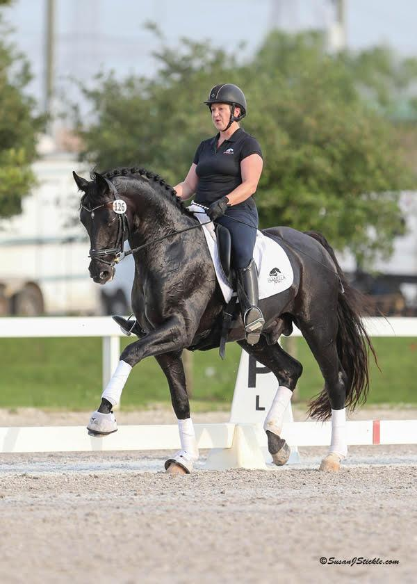 "<a href=""https://westfalenna.hibid.com/lot/38359009/supremat-old---frozen-semen"" target=""_blank"">Lot #40 - Supermat OLD: 2008 Black Oldenburg Stallion (Sandro Hit - Rubinstein I- Feingau)</a>"