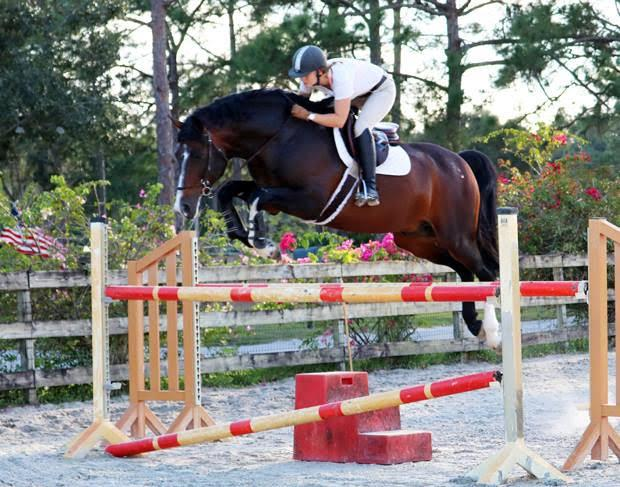 "<a href=""https://westfalenna.hibid.com/lot/38323790/bliss-mf"" target=""_blank"">Lot #8 - Bliss MF: 2006 Bay Zweibrücker Stallion (Balout du Rouet x Argentinus) </a>"