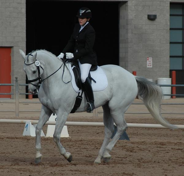 Loukas - 2006 Oldenburg Mare ($30,000 and Under)