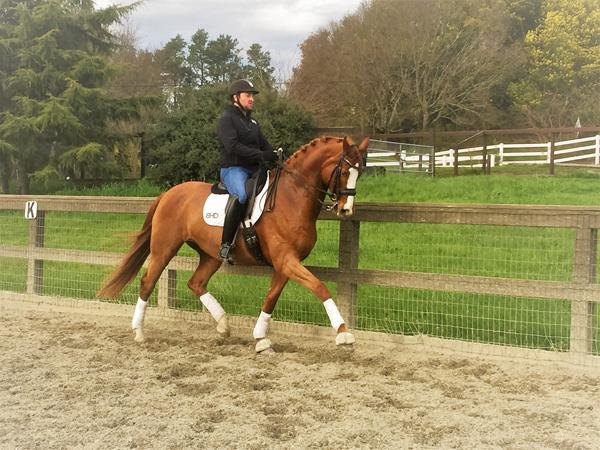 Lucky - 2005 Oldenburg Gelding ($75,000 - $100,000)