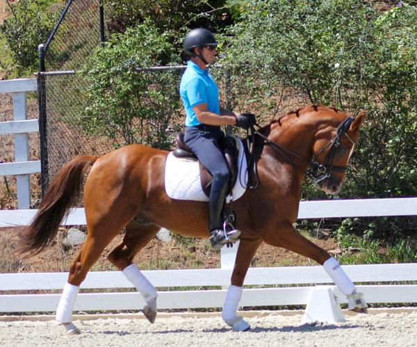 Lysias - 2007 Oldenburg Gelding ($100,000 and Up)