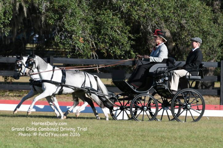 "Mary Phelps and ""The Gangsters"" getting the hang of the FEI Driven Advanced Dressage test"