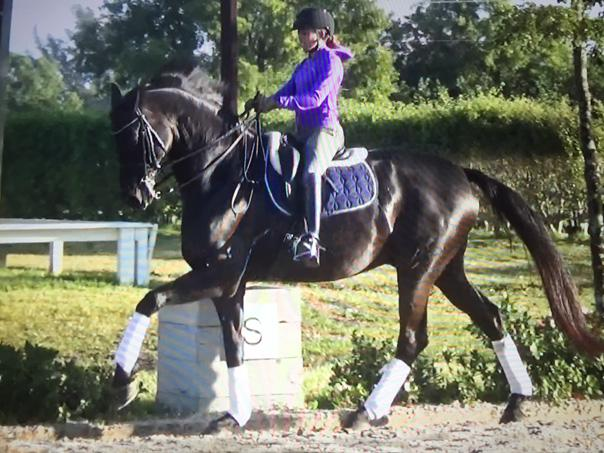 Mister - 2004 Oldenburg Gelding ($100,000 and Up)