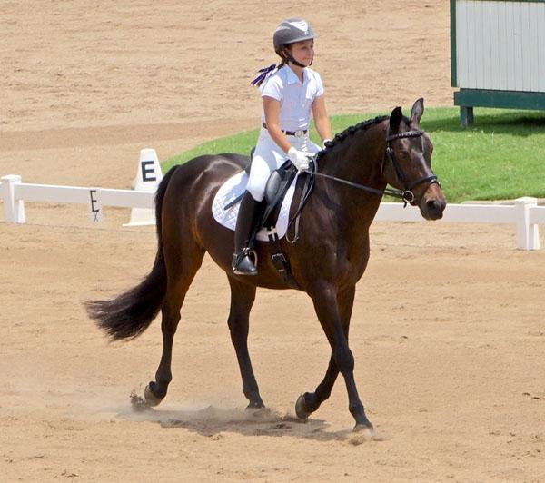 Monte Carlo - 2003 French Riding Pony Gelding - ($50,000 - $75,000)
