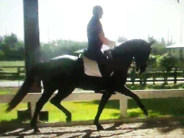 Noir - 2012 Oldenburg Mare ($100,000 and Up)