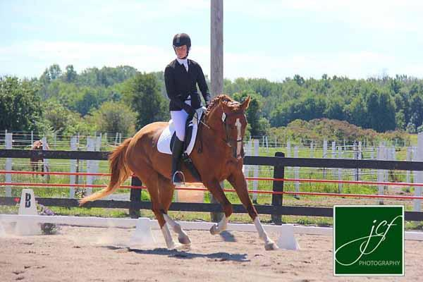 One the Rocks - 2011 Dutch/Hanoverian Cross Gelding ($30,000 and Under)