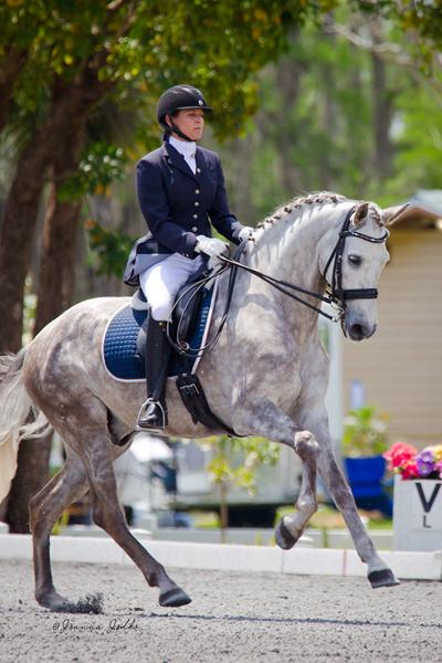 Picasso - 2004 Andalusiam Gelding ($75,000 - $100,000)