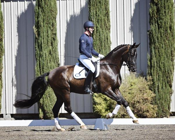 Dark Knight - 2010 Hanoverian Gelding ($100,000 and Up)