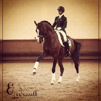 Don Quichot - 2003 Belgium Warmblood Stallion ($100,000 and Up)