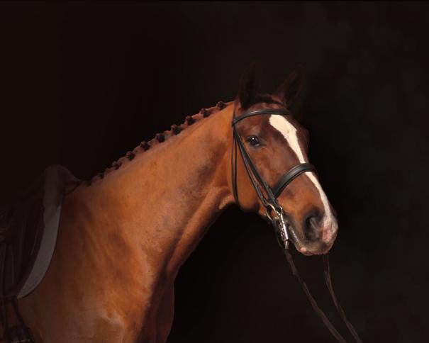 R D'Arsey - 2007 Hanoverian Gelding ($100,000 and Up)