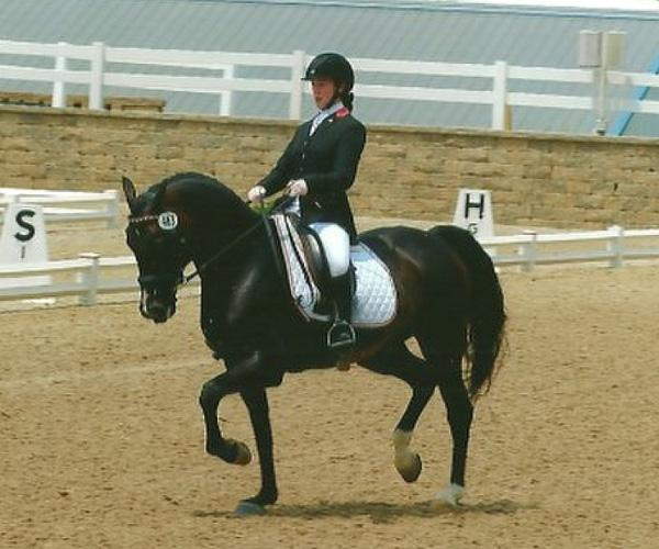 Rhoyal Bugatti - 2005 Oldenburg Gelding ($30,000 - $50,000)