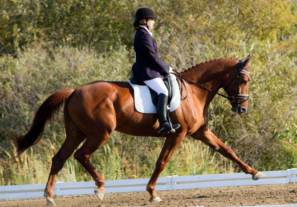 Rika - 2001 Canadian Warmblood Mare ($30,000 and Under)