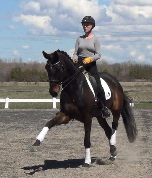 Rock My Lady - 2007 Westphalian Mare ($100,000 and Up)
