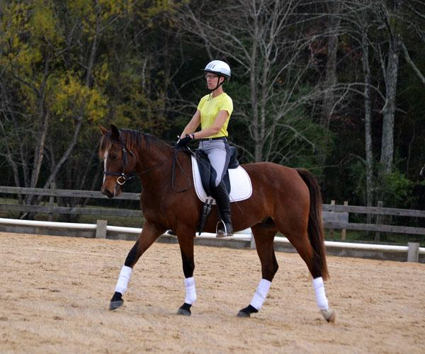 Rockafella - 2011 RPSI Gelding ($30,000 and Under)