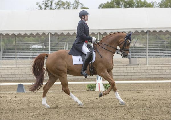 Rouletto - 2002 Hanoverian Gelding ($100,000 and Up)