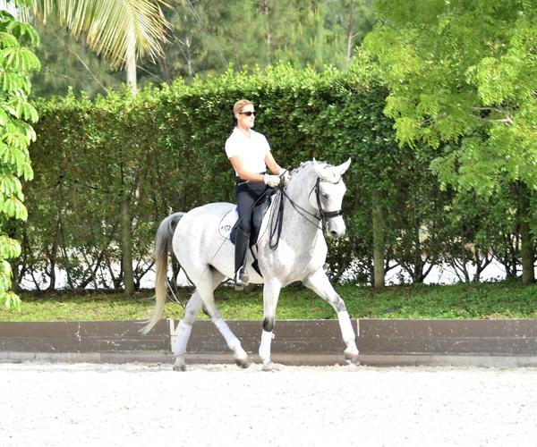 Royal Angel - 2003 Oldenburg Mare ($75,000 - $100,000)