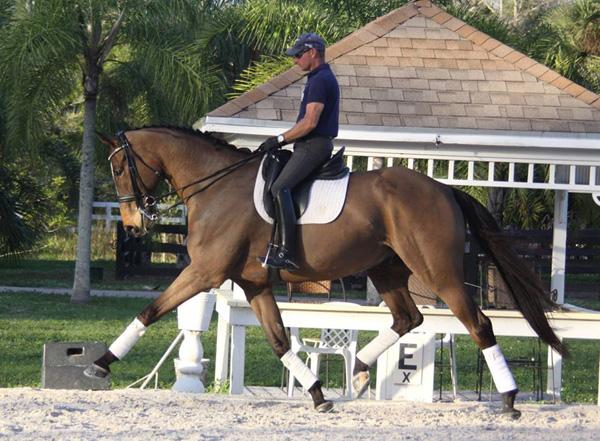 Royal Tribute - 2006 Oldenburg Gelding ($75,000 - $100,000)