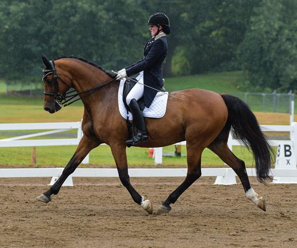 Rumble - 2000 Holsteiner Gelding ($50,000 - $75,000)