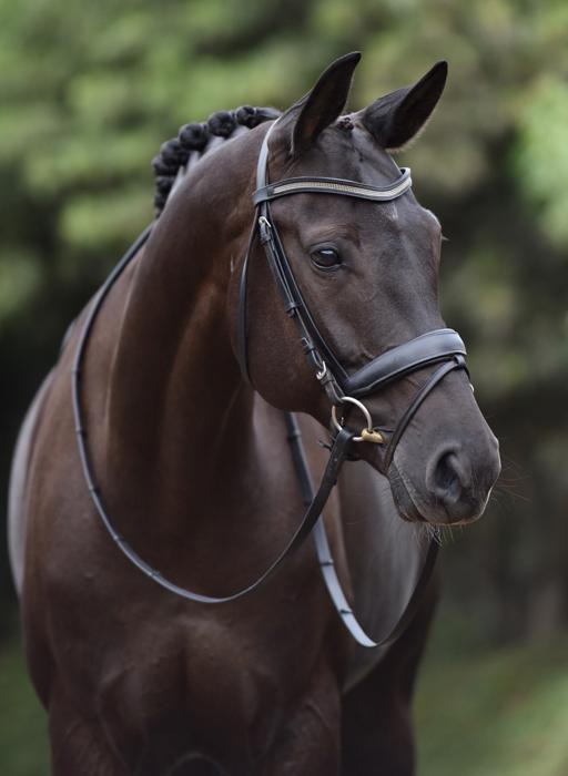 Sans Souci - 2009 Oldenburg Gelding ($100,000 and Up)