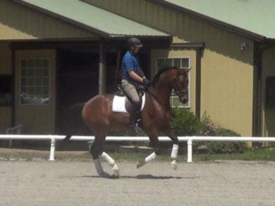 Santana - 2011 Oldenburg GOV Gelding ($50,000 - $75,000)