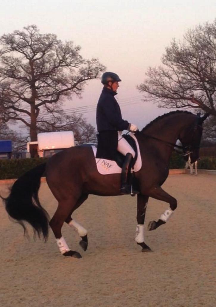 Anders Dahl Selten HW - by Sandro Hit and SPS High Princess (Hohenstein/Donnerhall/Bolero)