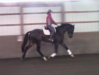 Shpectrum - 2014 Oldenburg GOV Gelding ($50,000 - $75,000)