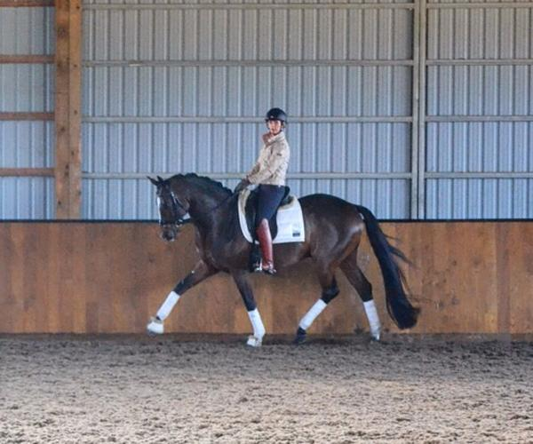 Sieger Boy - 2009 Oldenburg Gelding ($30,000 - $50,000)