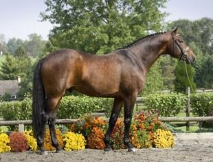 Sir Sinclair - 1999 KWPN Stallion