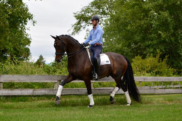 Sonaco - 2008 Oldenburg Gelding ($100,000 and Up)