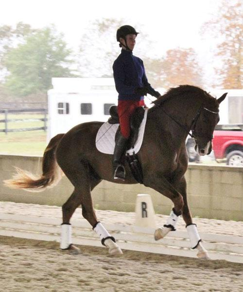 Sonata - 2011 Oldenburg Gelding - ($30,000 - $50,000)