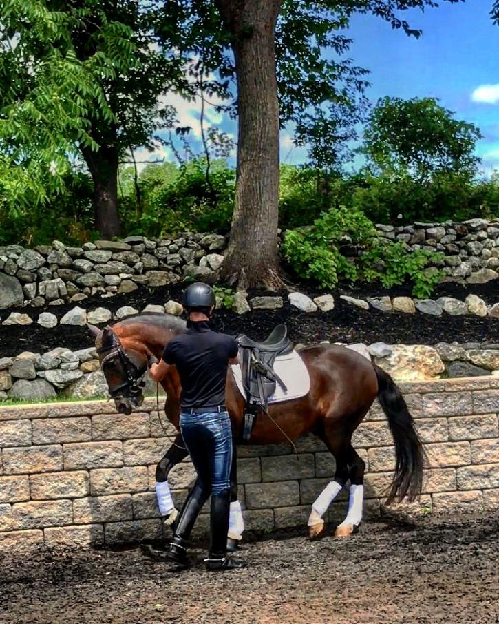 Stephen working the piaffe in hand with Cecelia Stabile's Lusitano Stallion, Orgulhoso HI at Milton House Farm (Photo: Amanda Diefenbach Photography)