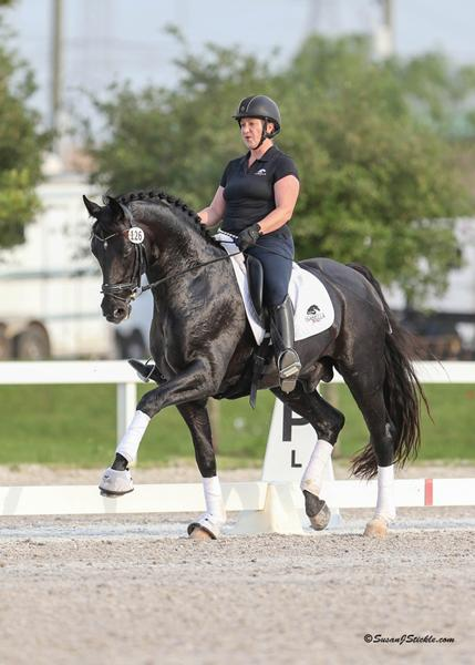 Lot # : 59 - Supremat OLD - 2008 16.2h Black Oldenburg Stallion (Sandro Hit - Rubinstein I-Feingau)