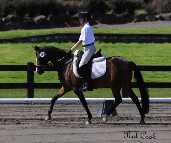 Tide Creek China Doll - 2005 Section B Welsh Mare - ($30,000 and Under)