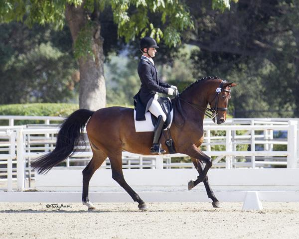 Untouchable Secret - 2004 Holsteiner Mare ($100,000 and Up)