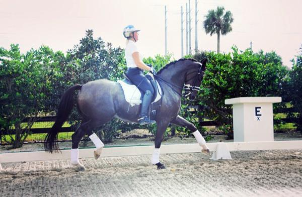 Valentino - 2008 KWPN Gelding - ($100,000 and Up)