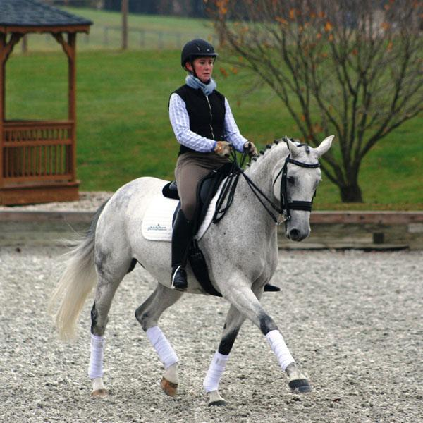 Veraki - 2003 Oldenburg Mare - ($50,000 - $75,000)