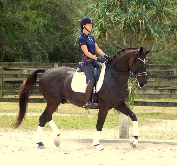 Viggo - 2004 Swedish Warmblood Gelding ($100,000 and Up)